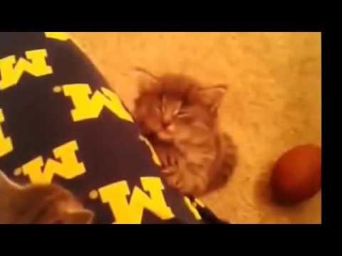 Funny Cat Videos [ 1 ]