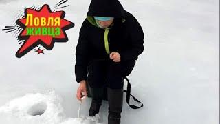 Ловим живца Готовимся к рыбалке на щуку