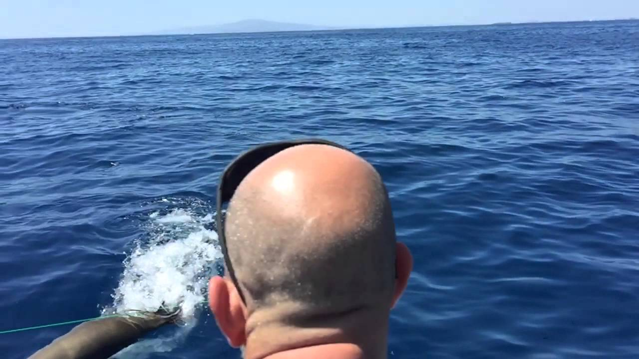 Great White shark hunts sea lion next to boat