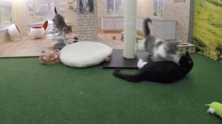 子猫たちが暮らすニャンコハウス、キュートな住人も大満足