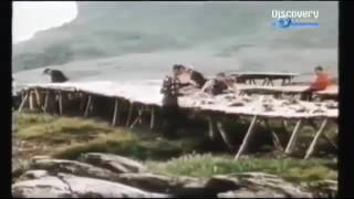 Vikings in North America BBC