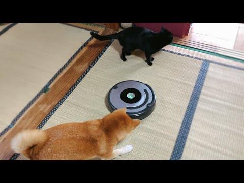 我が名はルンバ。犬に追い回され猫にシカトされし者なり Dog vs. Roomba