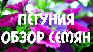 Обзор сортов семян #петунии