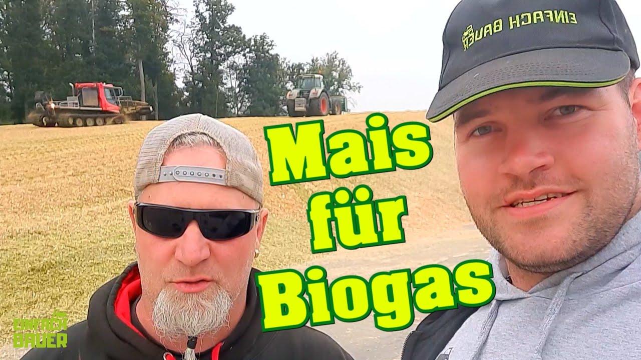 Mais ballern für eine Biogasanlage