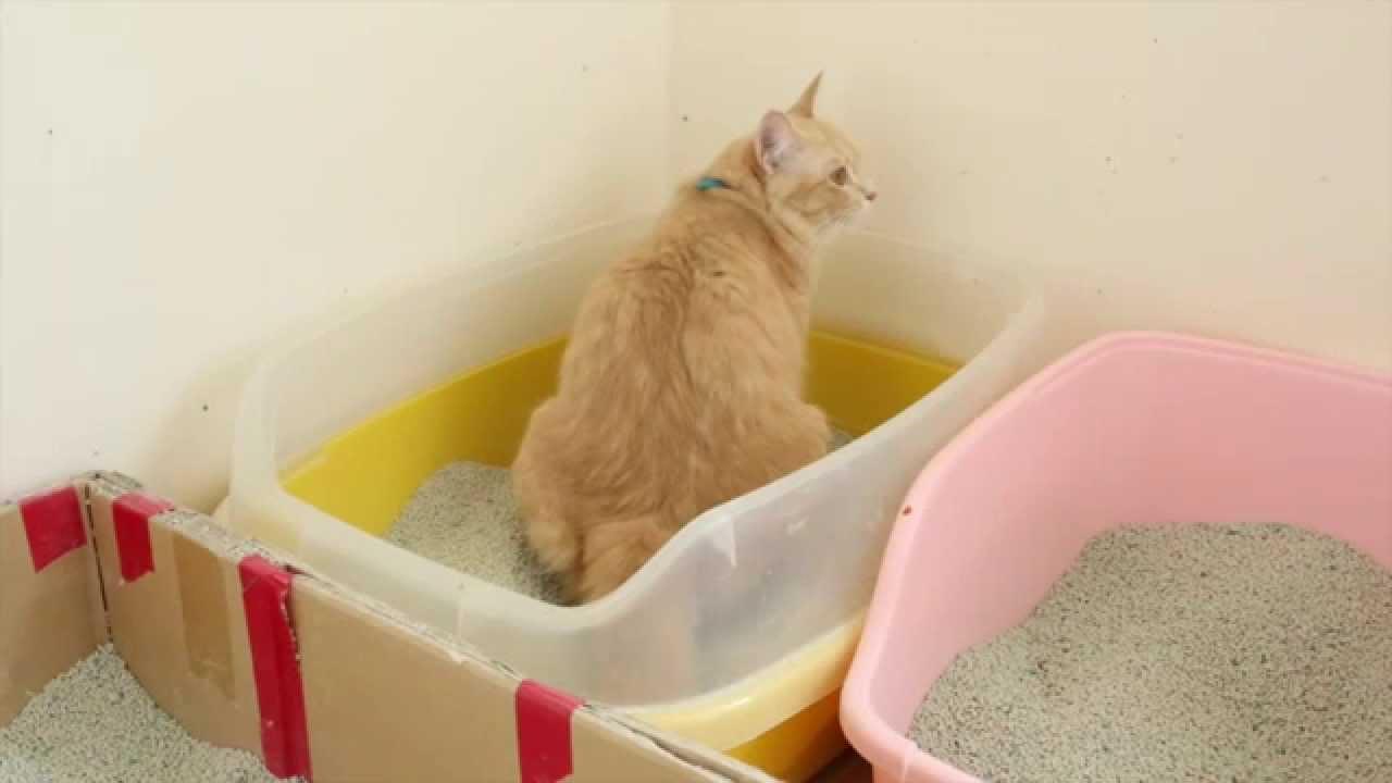 Image result for กระบะทรายแมว
