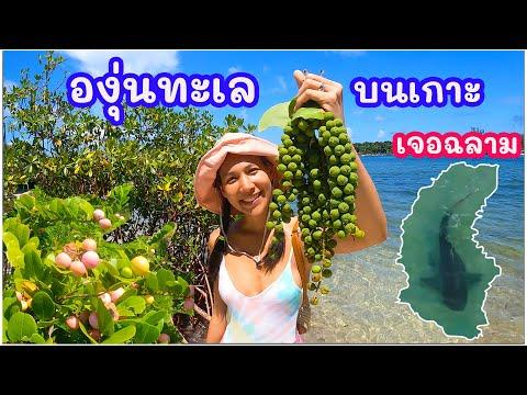 องุ่นทะเลบนเกาะ มีฉลามด้วย(EN/TH sub) Green sea grapes on the island and a shark