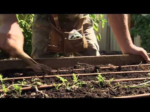 Gardening Tips Adelaide - Raised beds