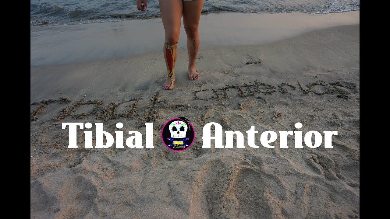 Tibial Anterior /Anatomía - YouTube
