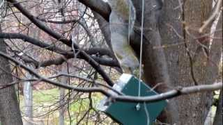 A Squirrel Spin & Flip On Squirrel Proof Bird Feeder, Usa Made Rollerfeeder