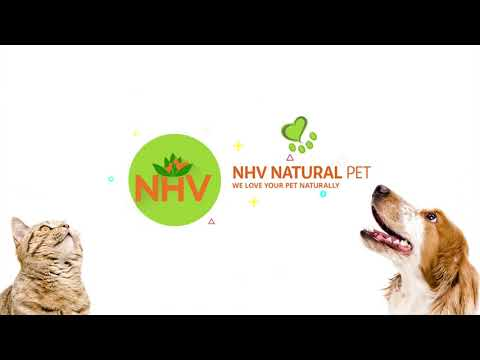 Vet Tech Rounds: How to Prevent Seasonal Allergies in Dogs and Cats