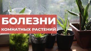 Болезни комнатных растений. Как определить чем болеет цветок