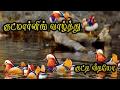 குட்மார்னிங் வாழ்த்து கவிதை குட்டி வீடியோ {Good morning Wishes Kavithai in Tamil Video} #070