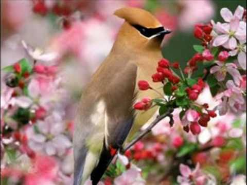 flores preciosas paisajes y maswmv