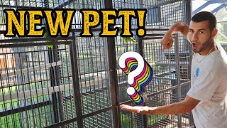 building-a-home-for-new-exotic-parrots