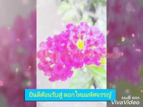 รวมภาพดอกไม้สวยๆ