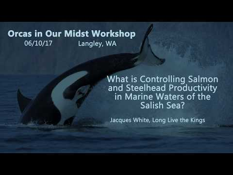 Orcas in Our Midst Workshop #5 - What is Controlling Salmon Productivity in the Salish Sea?
