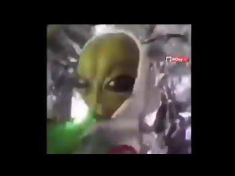 Alien meme song Patlamaya Devam (Official Video)_Full-HD ...