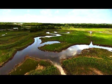 The Staten Island Wetlands