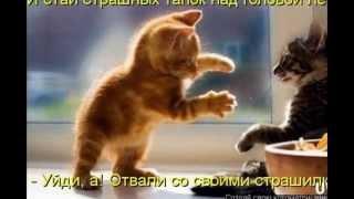смешные фотографии котят и кошек!