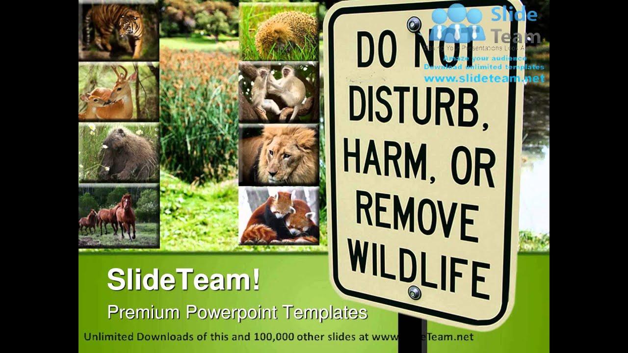 animal ppt template