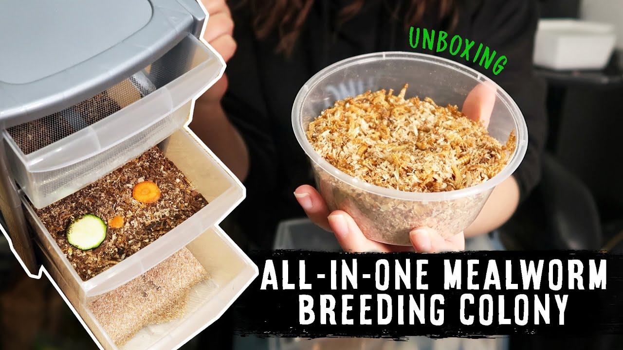 Thank You To Leopard Gecko For Doing A Video On One Of HGI's Mealworm Breeding Kits!