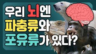 뇌의 구조와 기능 '우리 뇌엔 파충류와 포유류가 있다!…