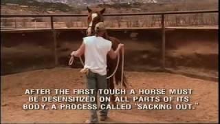 Wild Horse Redemption Trailer