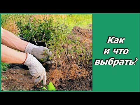 Что посадить в саду? Как выбрать декоративный кустарник для сада?