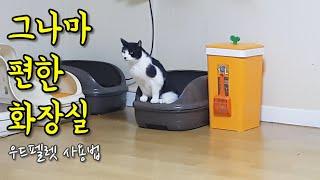 그나마 관리가 편한 고양이 화장실 소개 (우드펠렛 사용…