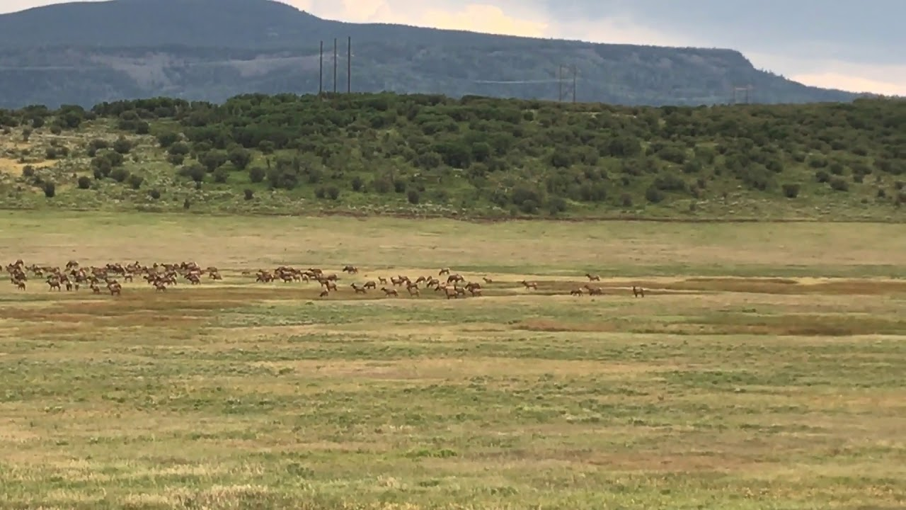 Top 16 Big Game Hunting Ranches for Sale • Mirr Ranch Group