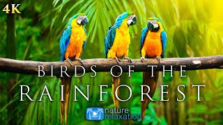 (4K) Breathtaking Colorful Birds of the Rainforest  1HR Wildlife Nature Film + Jungle Sounds in UHD