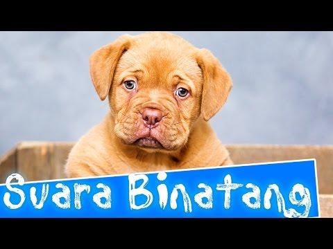 Suara binatang untuk anak-anak | Indonesia