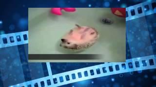 Ежик принимает ванну. Животные веселятся. Смешной ежик