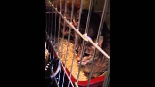 котята 3 месяца отдаются в добрые руки