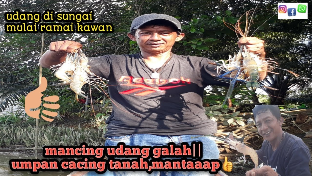 Mancing udang galah||umpan cacing-tigo fishing - YouTube