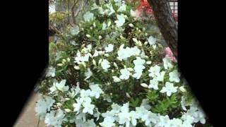 玄関には、平塚特産のバラ切花から横田園芸3品種、横山ばら園2品種。庭...