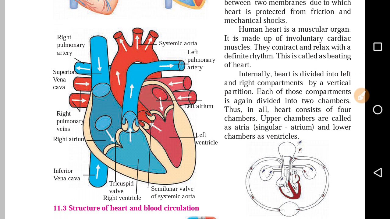 small resolution of part 2 class 8th science human body and organ system blood circulation system