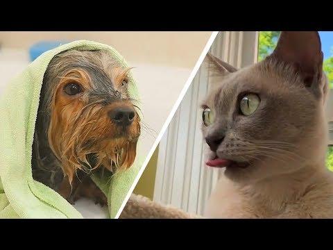 Вопрос: Почему собаки разных пород сильно отличаются между собой, а кошки – мало?