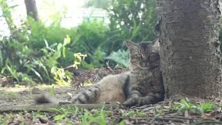 シンガポールの猫島へ!セントジョンズ島なら数時間で満喫可能│LINEトラベルjp