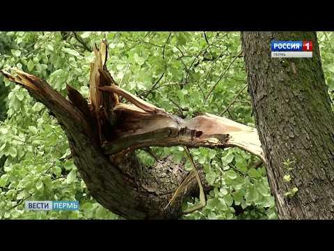 Налетели «ветры злые»: В Перми подсчитывают ущерб от урагана