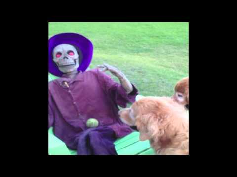 Dog Wants to Play Fetch with Halloween Decoration
