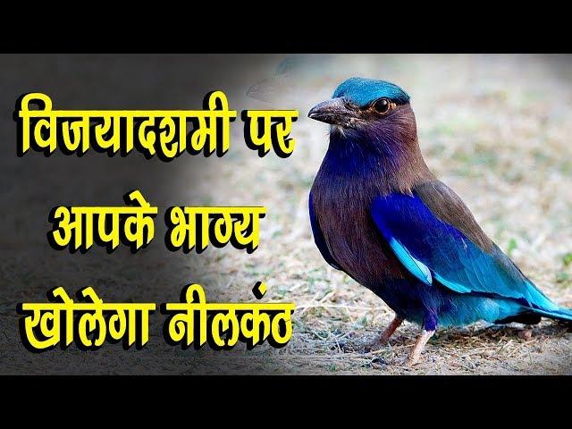 Vijaya Dashmi में कीजिए पक्षी नीलकंठ के दर्शन, खुल जायेगी आपकी किस्मत l LiveCities