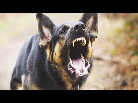 how-to-stop-your-german-shepherd-from-biting-and-nipping