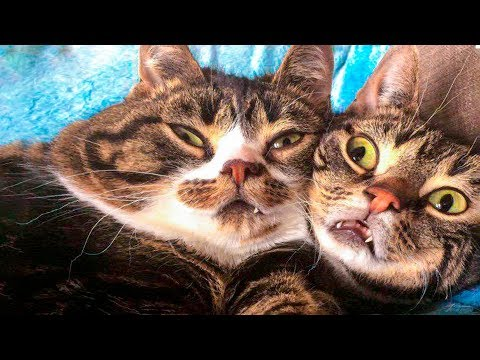 😁 Funniest 😻 Cats and 🐶 Dogs – Awesome Funny Pet Animals 😇