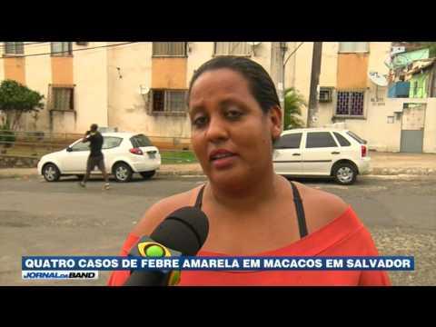 Salvador vai ter campanha de vacinação contra febre amarela