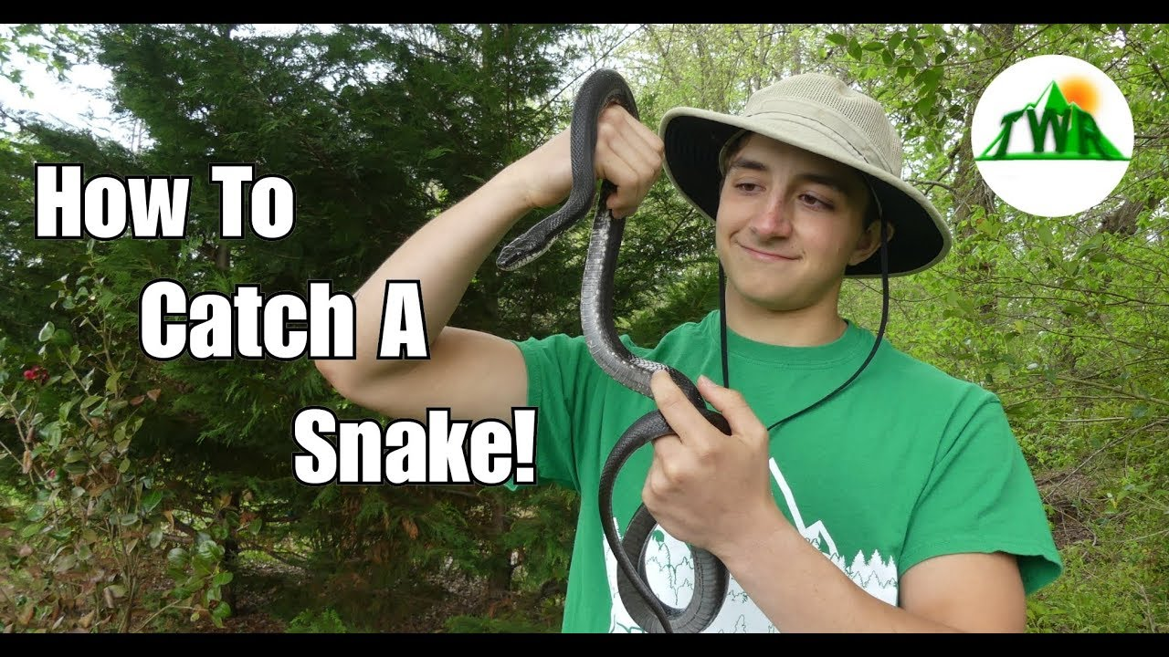 How to Find and Catch a Snake In Your Yard! (Bare Handed ...