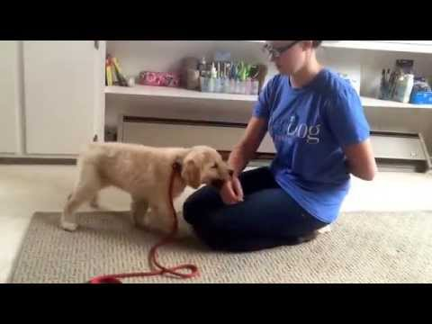 emma's-daily-minutes---how-to-stop-puppy-biting!