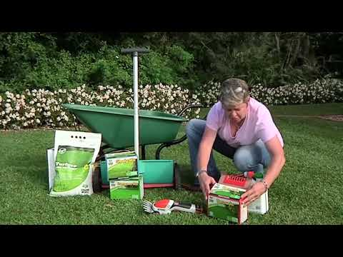 Gardening Tips: Let's talk about Lawn