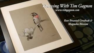 How To Draw A Grosbeak and Magnolia Flower Blossom Full Drawing Lesson by Tim Gagnon