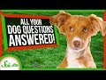 Your Dog Questions Answered! | Compilation